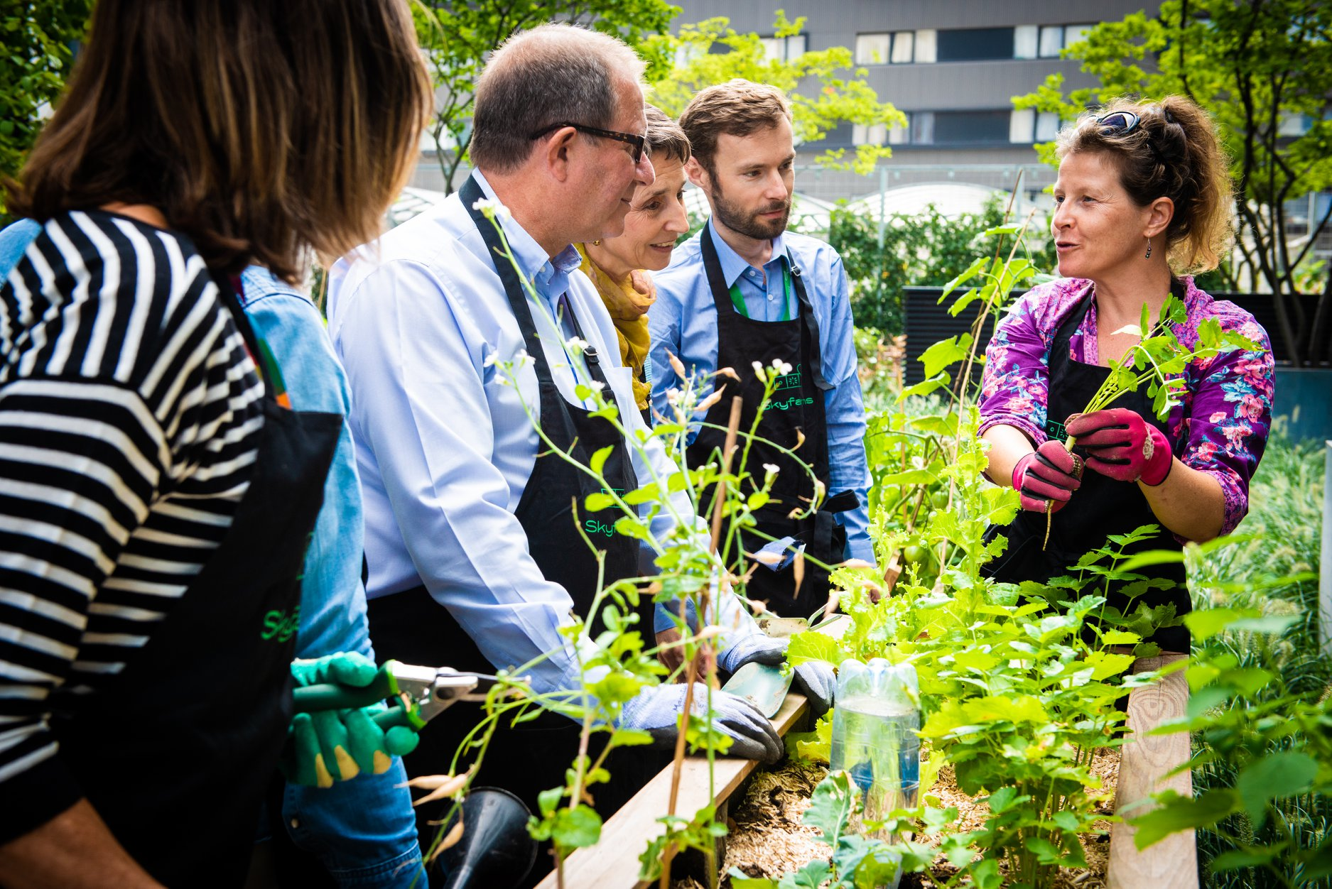 Skyfarms conseils potager plantes