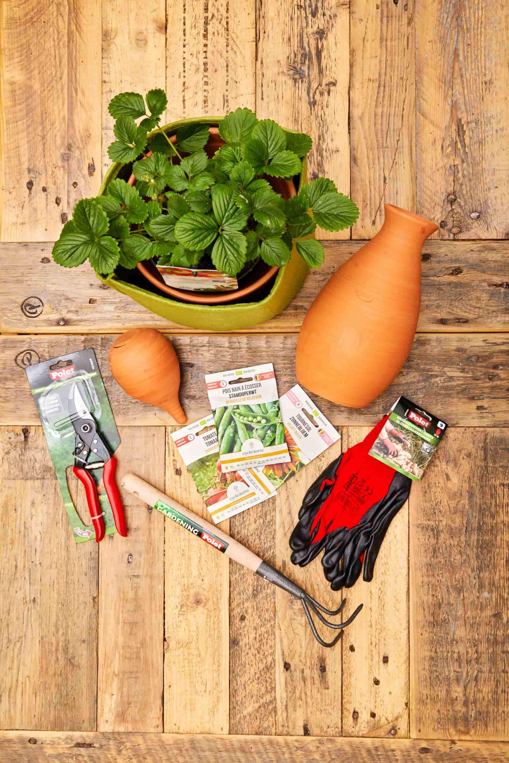 Skyfarms outils oyas fraises semences pour jardin potager balcon ou terrasse