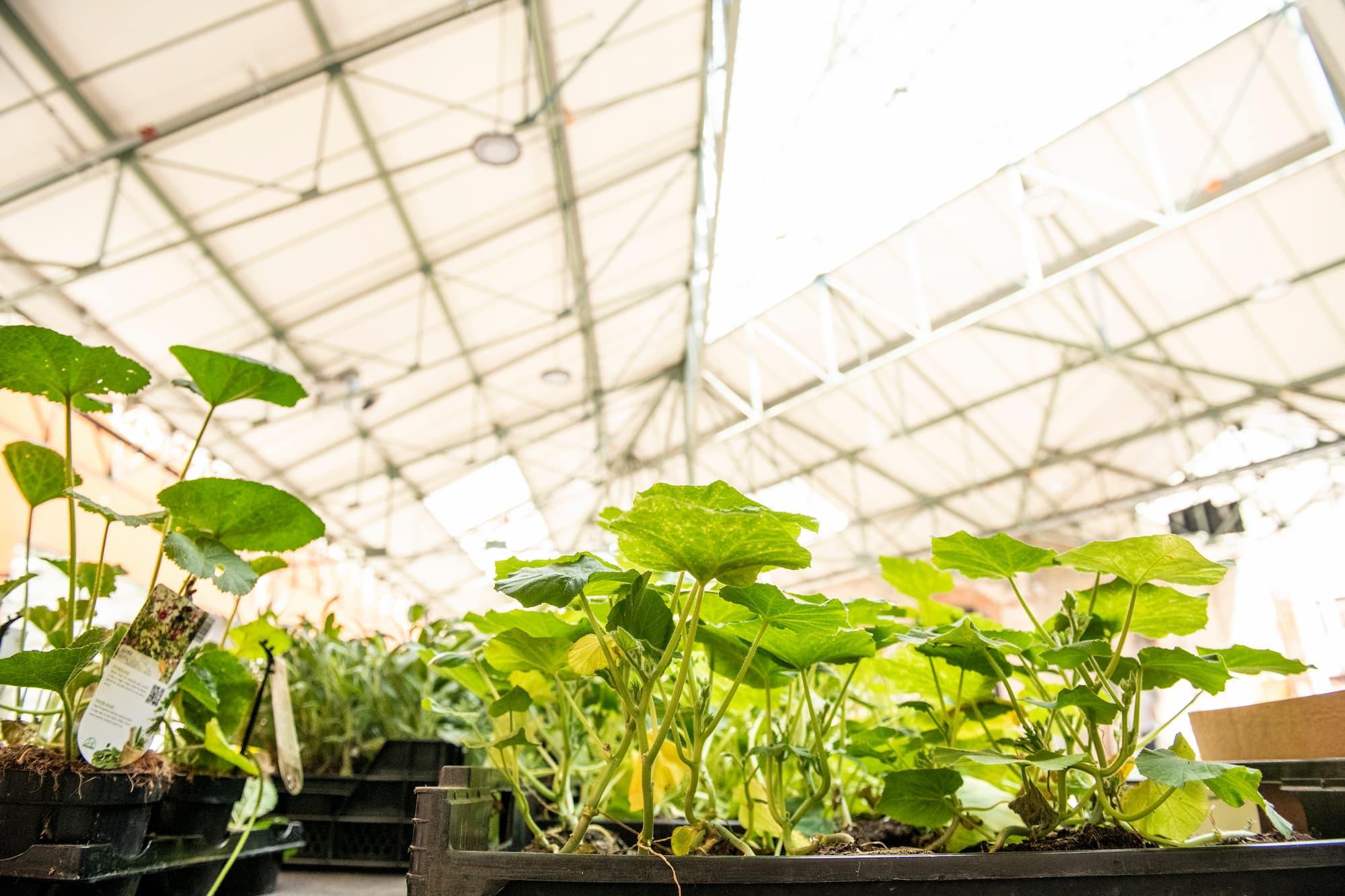 skyfarms planten voor de moestuin of terras in BE-HERE Laken