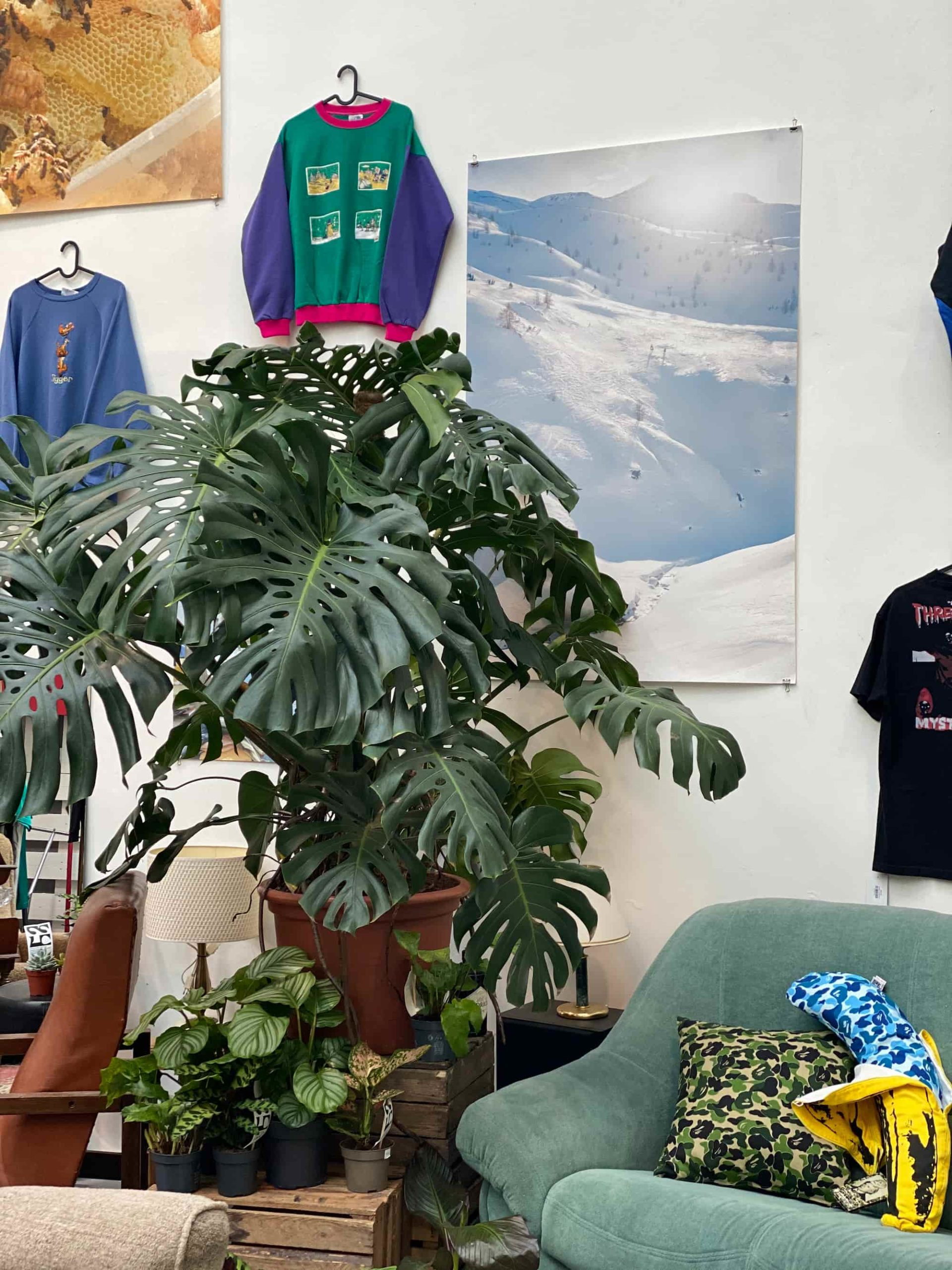 boutique vêtements seconde main vintage et vente de plantes